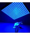 LED vekstpanel blå, 15W, 220V, Grow lamp